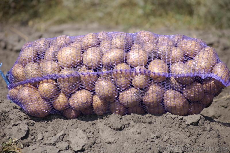 Картофель в сетках на продажу