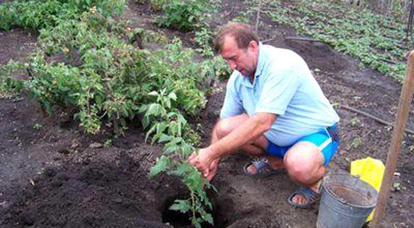 Подготовка места для пересадки малиновых кустов