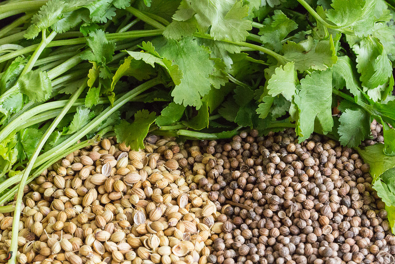 Зелень и семена коринадра