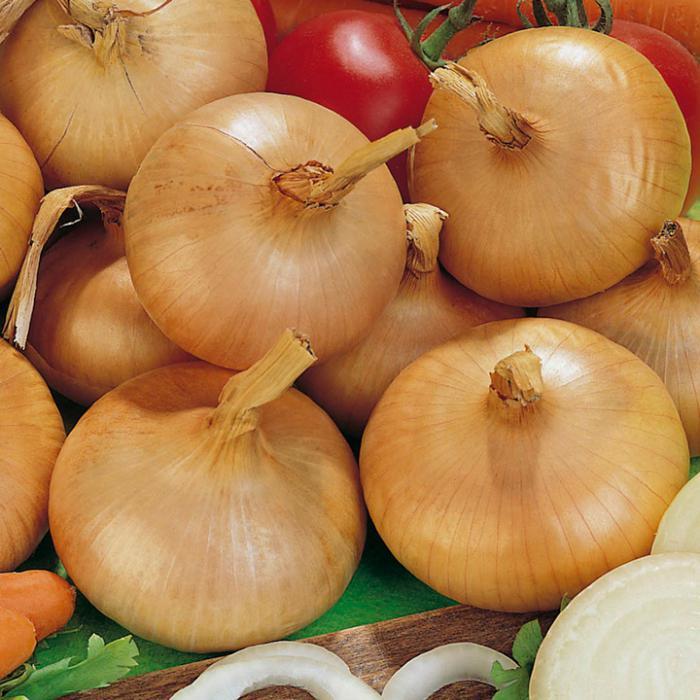 Крупные луковицы на столе