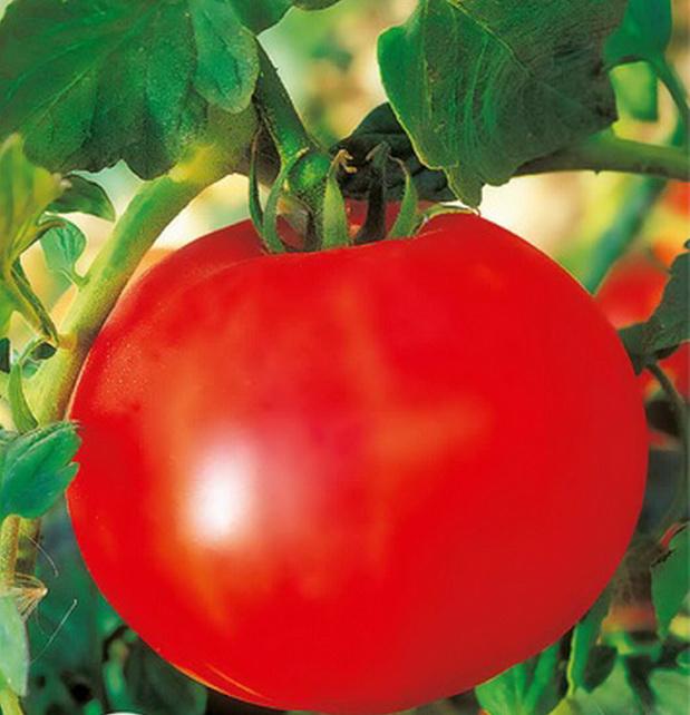 Сорт томата Леля f1