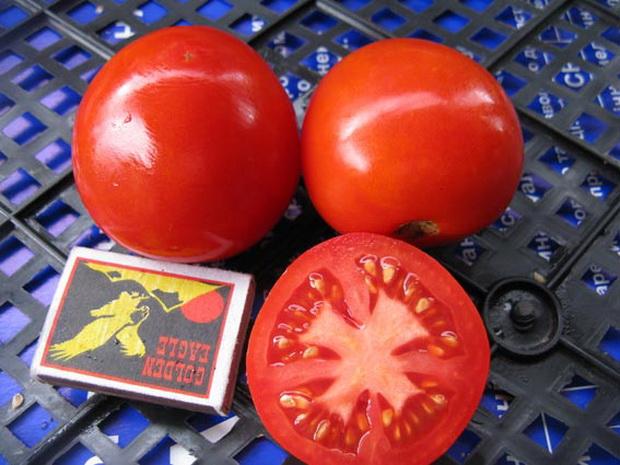"""Сорт томата """"Валютный"""""""