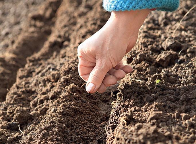 Посадка семян в почву