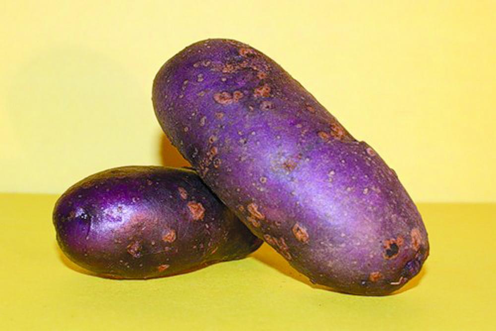 Картофель фиолетового цвета подходит для разных целей