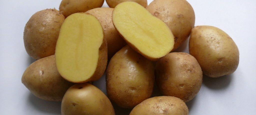 Картофель сорта Невский