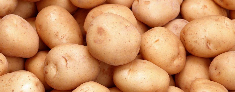 """Картофельный сорт """"Голубизна"""""""
