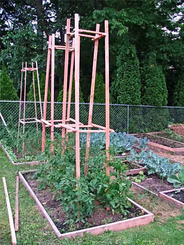 Подвязка помидор с помощью конструкции колпак
