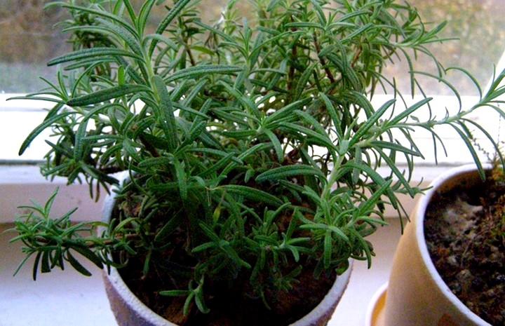 Зелень в горшке, растущая на подоконнике