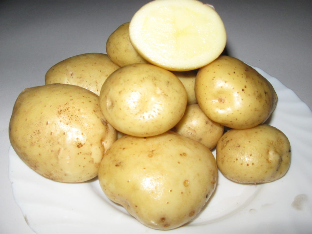 "Картошка ""Голубизна"" в разрезе"