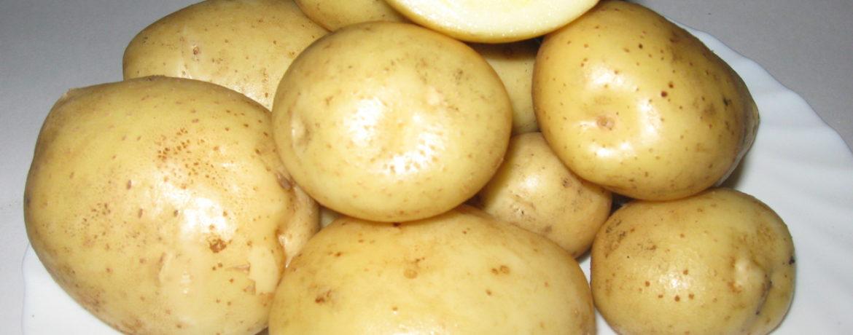 """Картофель """"Голубизна"""" в разрезе"""