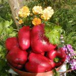 Урожай красного перца в миске