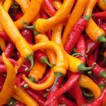 Урожай разного горького перца