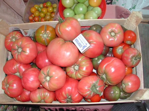 Хранение томатов в ящике