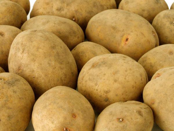 Семенной картофель из Беларуси - Скарб