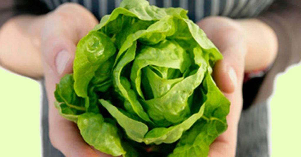 Салат латук в руках