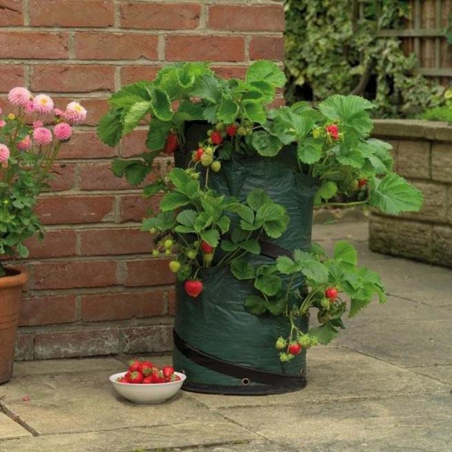 Вертикальное выращивание клубники в мешках