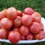 Урожай розовых томатов в тарелке