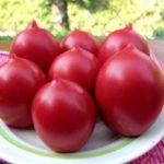 Урожай помидоров розовых на столе
