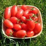 Урожай помидоров в миске