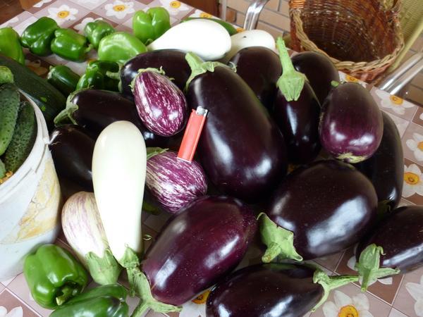 Урожай разынх сортов баклажанов на столе