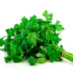 Пучок зеленой петрушки