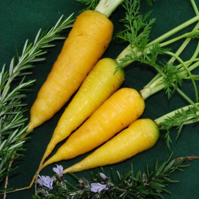 """""""Solar Yellow"""" сорт моркови"""