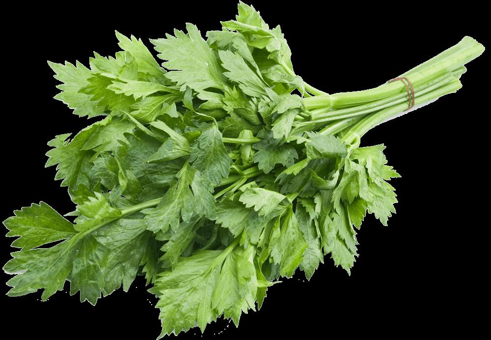 Пучок листового сельдерея