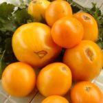 Урожай помидоров на столе