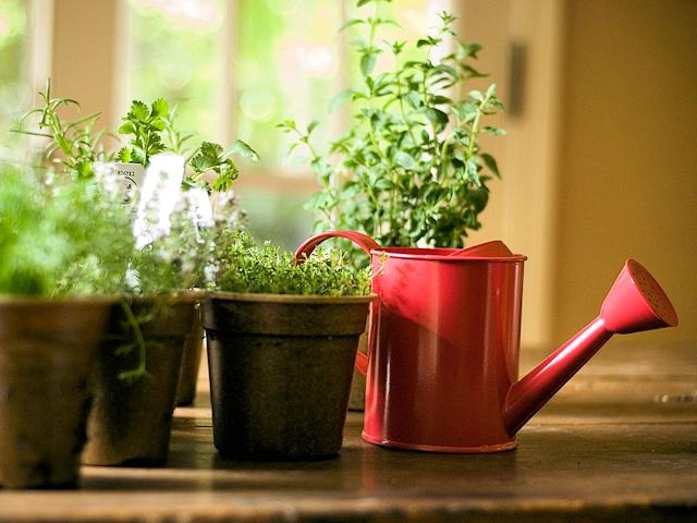 Лейка и растения на подоконнике