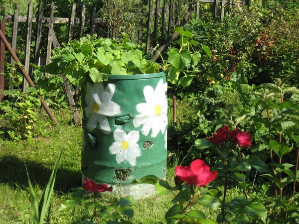 Выращивание в бочке огурцов в саду