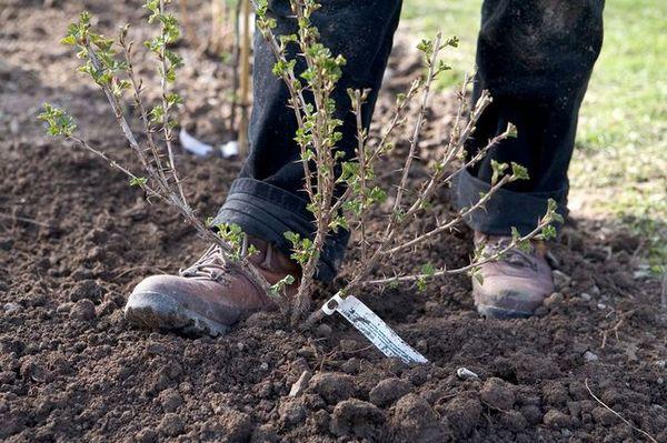 Весенние подкормки способствуют урожайности