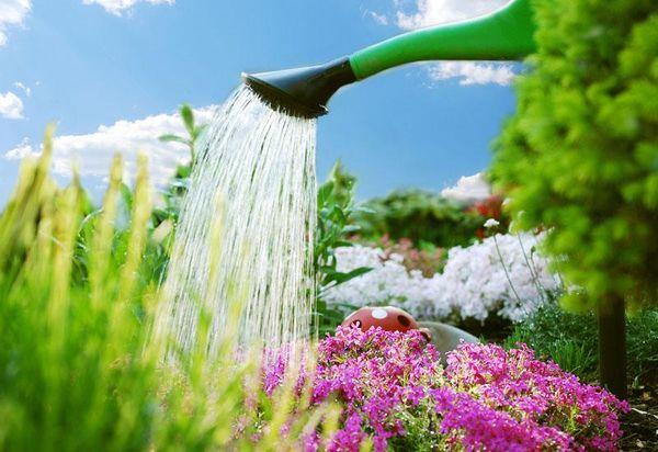 Питательные вещества в почве помогают отойти после обрезки