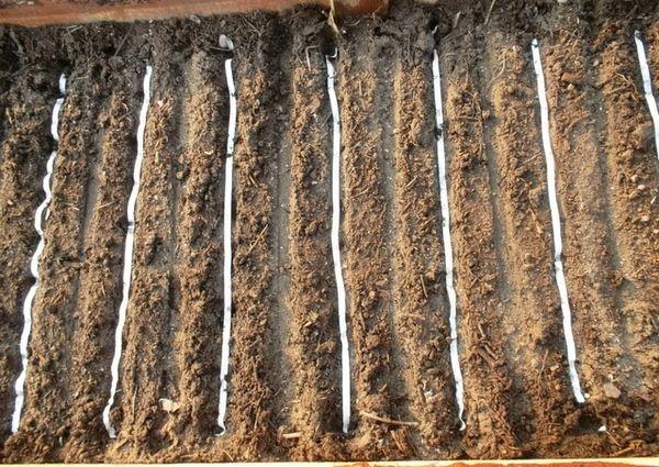 Подготовка почвы в теплице для посева