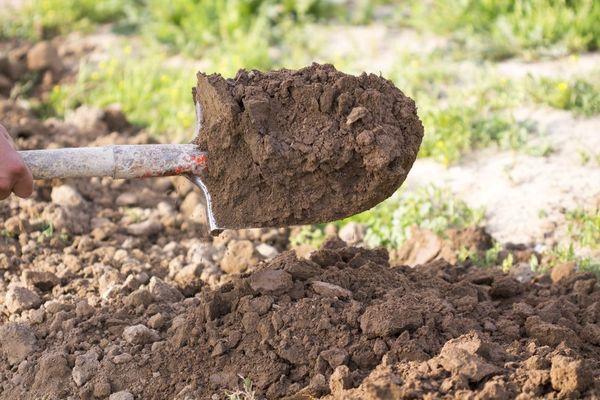 Подготовка почвы участка проводится осенью