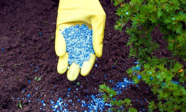 Смородина Нара: описание сорта раннего срока созревания, правила ухода и выращивания