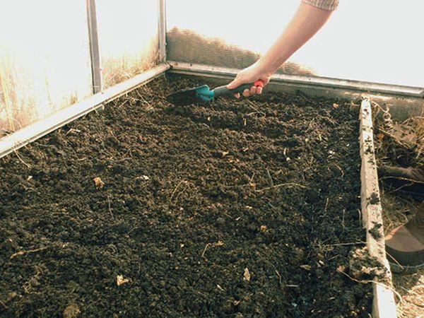 Подготовка почвы перед посадкой редиса