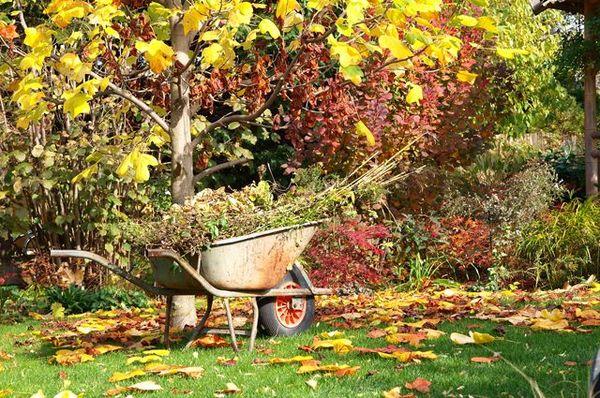 Осенью садоводам стоит прислушаться к лунному календарю