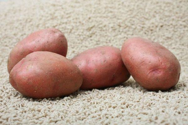 Картофель популярного сорта Розара