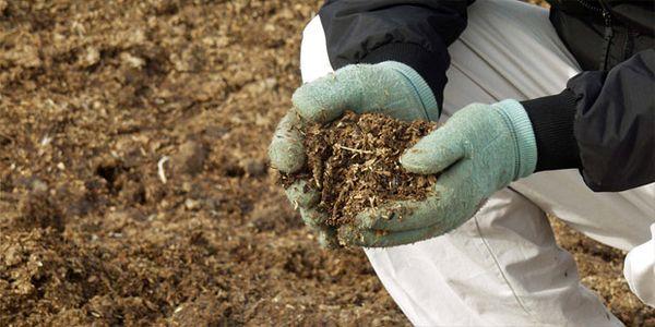 Органические удобрения повысят урожай крыжовника