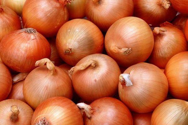 Вес луковицы Геркулес F1 может составить 100-130 гр
