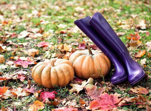 К началу ноября обычно уже завершен сбор урожая