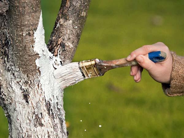 Яблоня Недзвецкого: описание декоративного сорта