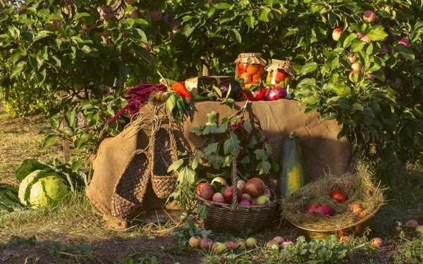 Многие дачники выращивают в приствольных кругах овощи