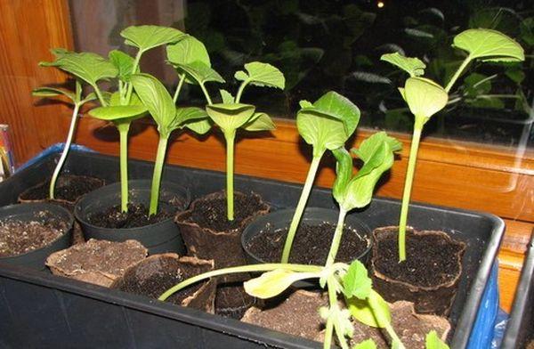 В июне производить посев семян уже поздно