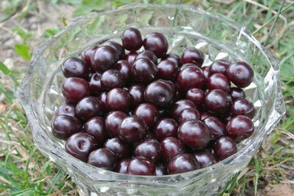 Сорт среднеспелый – ягоды созревают в июле