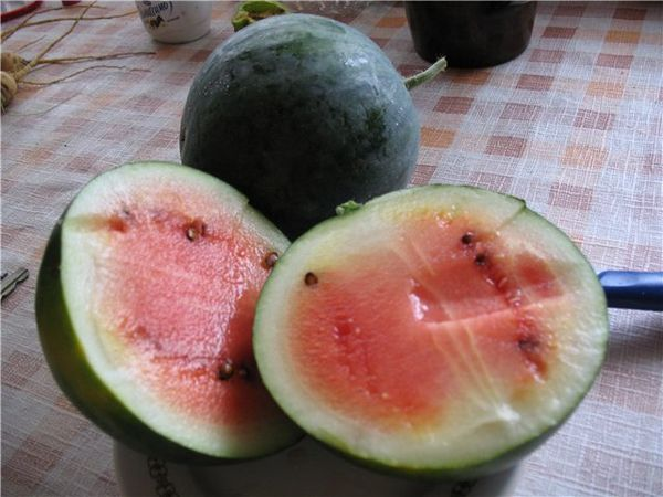 При правильном уходе вырастет сочный и сладкий арбуз