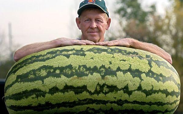 Самый большой арбуз в мире - 158 кг