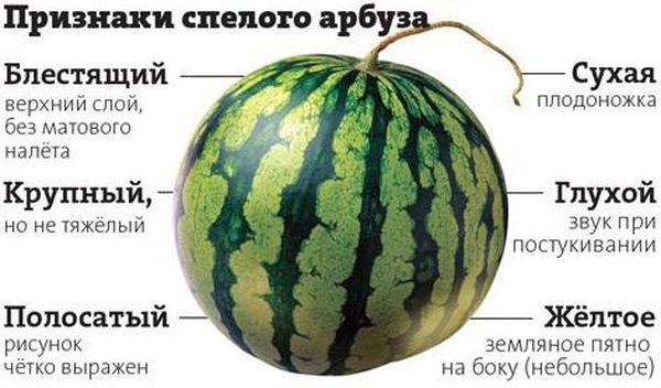 Основные признаки спелого арбуза