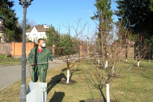Обработка защитит деревья от вредителей и болезней