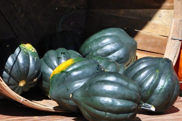 Плод Акорн очень странной формы – похож на желудь